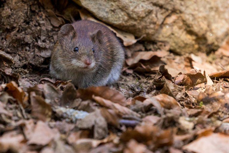 Best Way to Get Rid of Mice in Kitchen